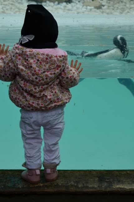 zoo de pont scorff morbihan (30)